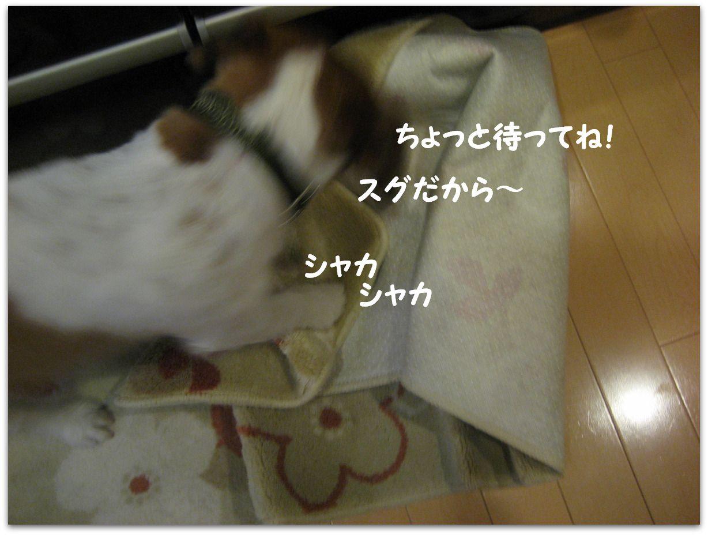 e0127409_0312491.jpg