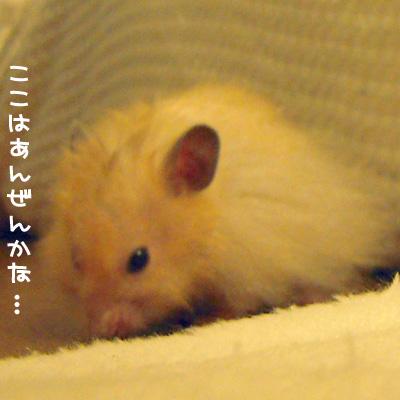 c0160473_1575467.jpg
