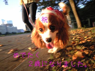a0120944_1339302.jpg