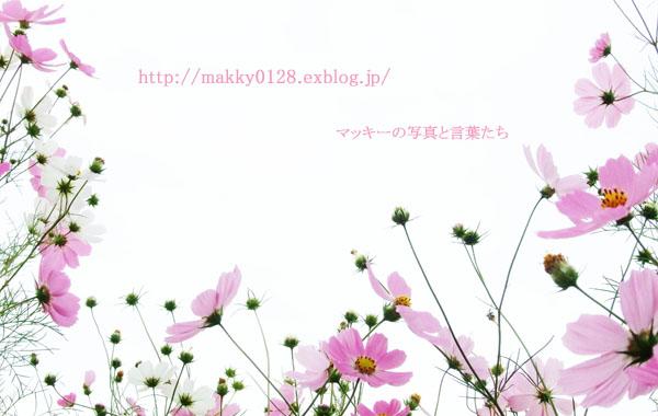 a0115202_222224.jpg