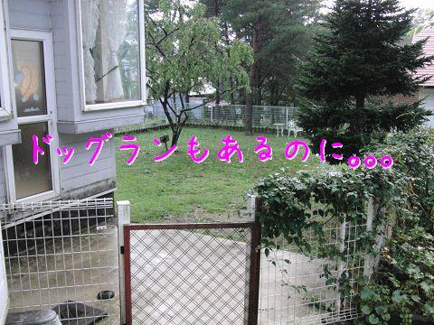c0134720_695714.jpg