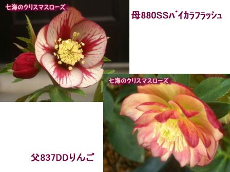 c0025140_21565349.jpg