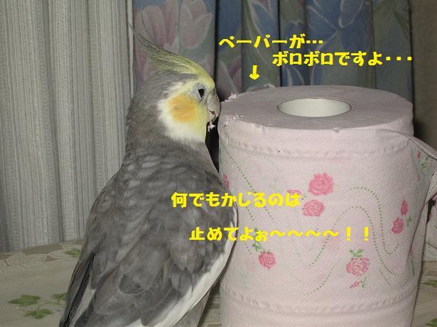 e0027078_15561632.jpg