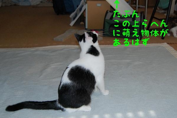 c0181639_0183866.jpg