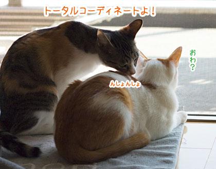 a0119470_1141219.jpg