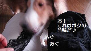 e0195743_2445426.jpg