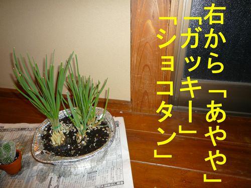 c0175759_22202756.jpg