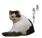 c0201577_1048321.jpg