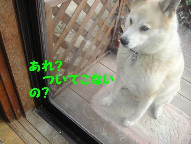 c0211642_18503821.jpg