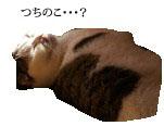 c0201577_1423232.jpg