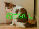 c0052756_17112819.jpg