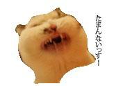 c0201577_9191214.jpg