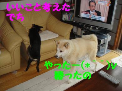 c0211642_203804.jpg