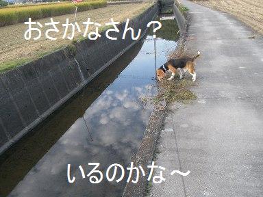 c0205806_1532638.jpg