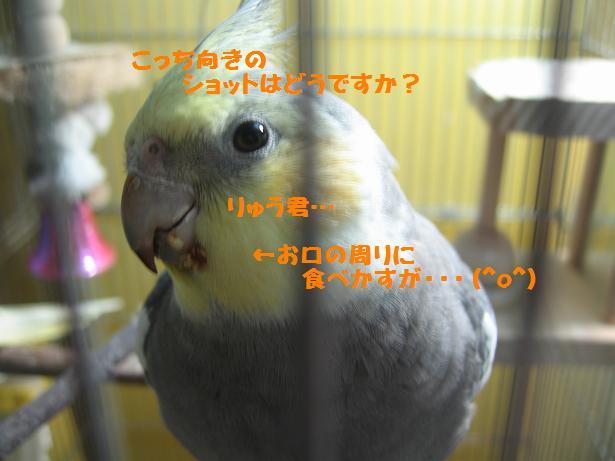 e0027078_10245616.jpg