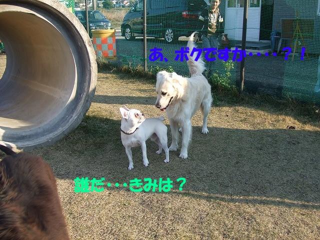 a0104162_2010125.jpg
