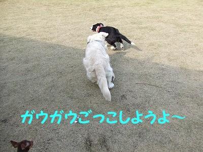a0104162_20113520.jpg