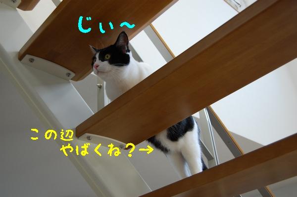 c0181639_11075.jpg