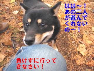 c0185516_9503296.jpg