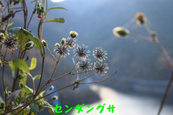 a0100564_18422426.jpg