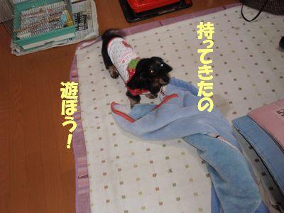 c0151866_1127571.jpg