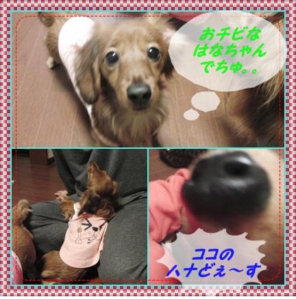 c0163878_1503488.jpg