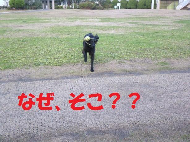 a0104464_105389.jpg