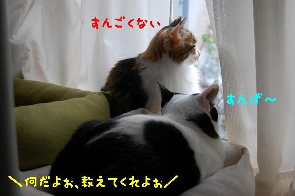 c0181639_138134.jpg