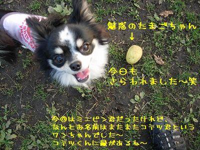 e0059267_16463481.jpg