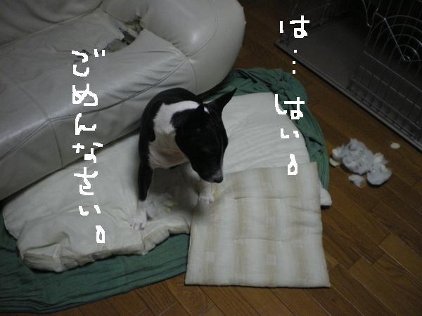 c0212703_16282736.jpg