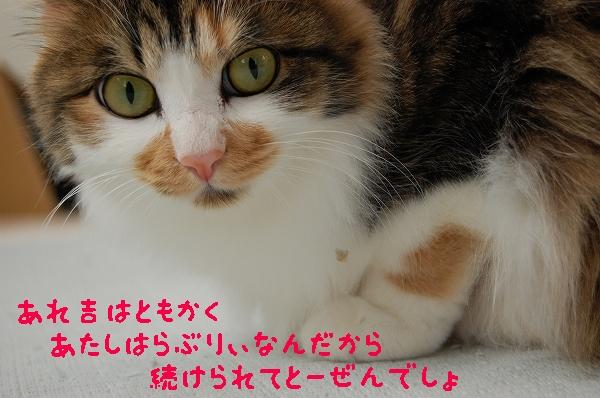 c0181639_0393979.jpg