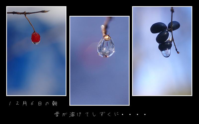 e0081973_1233652.jpg