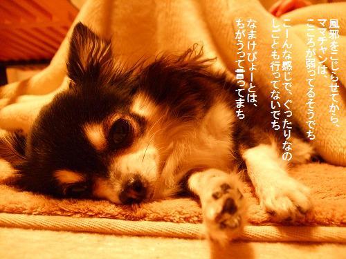 c0162005_0153826.jpg