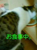 c0052756_23104089.jpg
