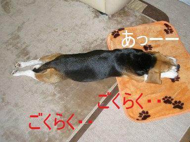 c0205806_1744351.jpg