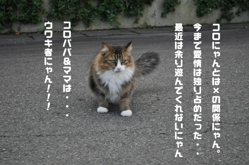 e0171996_951946.jpg