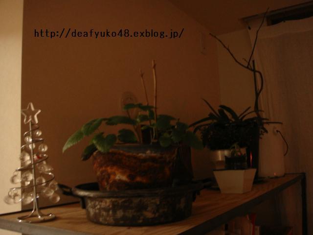 a0152269_1944140.jpg