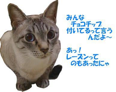 a0113070_0513975.jpg