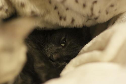 Newアイテム毛布のしたにすっぽり隠れた小僧