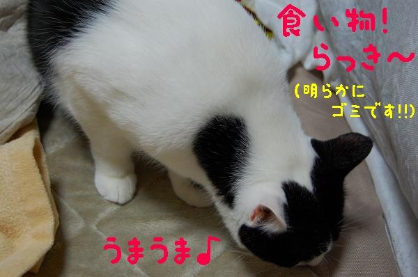 c0181639_141088.jpg