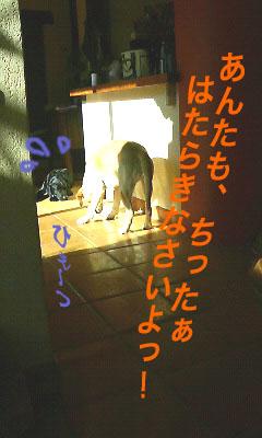 a0102815_19463045.jpg