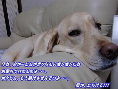 c0028792_22463195.jpg