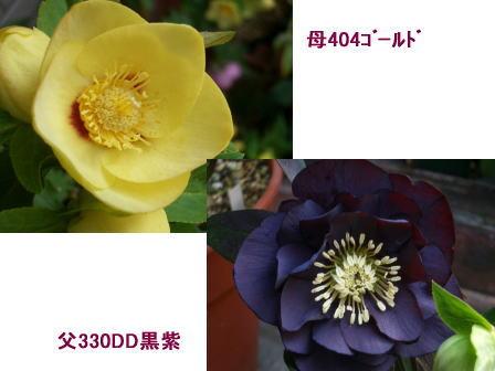 c0025140_0245425.jpg
