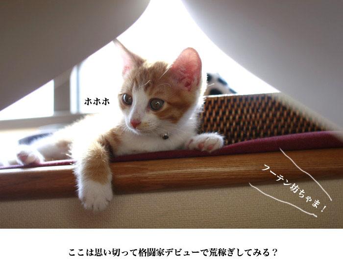 a0169366_1533732.jpg