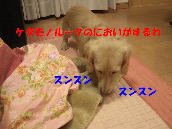 c0192541_17495299.jpg
