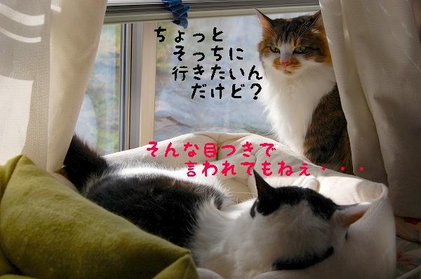 c0181639_029850.jpg