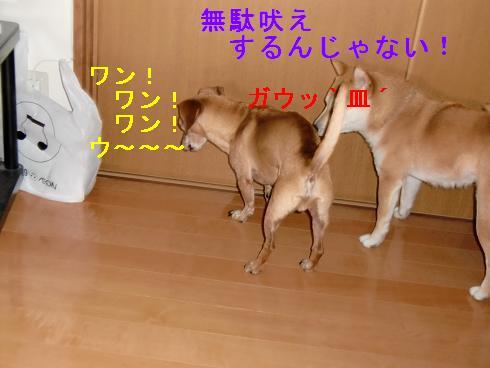 c0138720_14295468.jpg