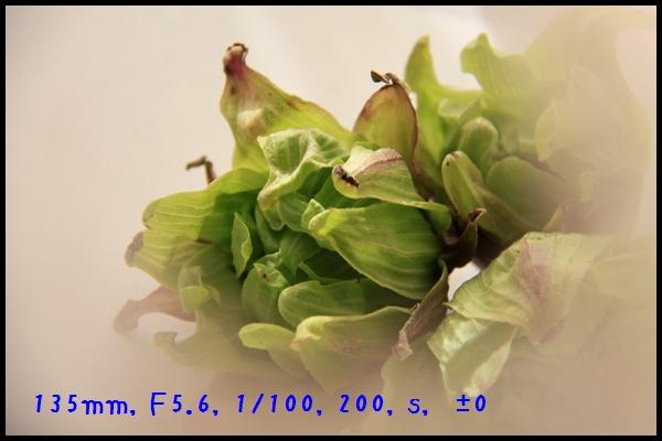 c0037200_19543683.jpg
