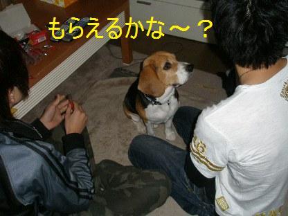 c0205806_1742326.jpg