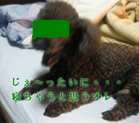 c0117239_8481597.jpg